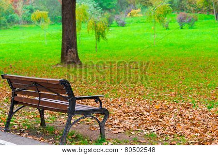 Fallen Leaves On A Lawn In Autumn Park  And  Bench