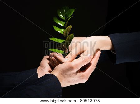 Sprout in hands