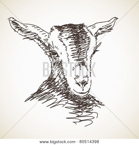 Sketch of goat. Hand drawn illustration. Isolated