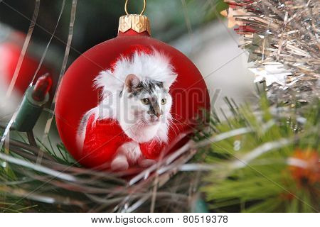 Cat in the bauble