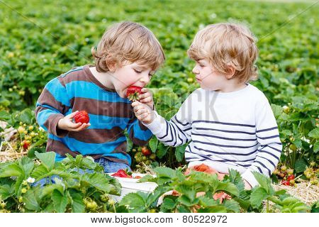 Two Little Friends Having Fun On Strawberry Farm In Summer