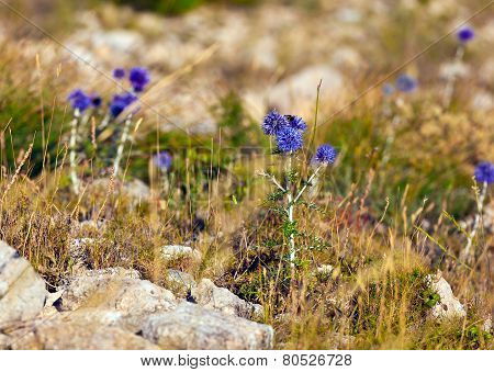 Violet flowers grown on the grey rock