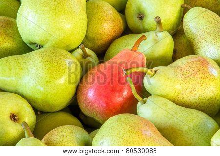 Rosemary Pears
