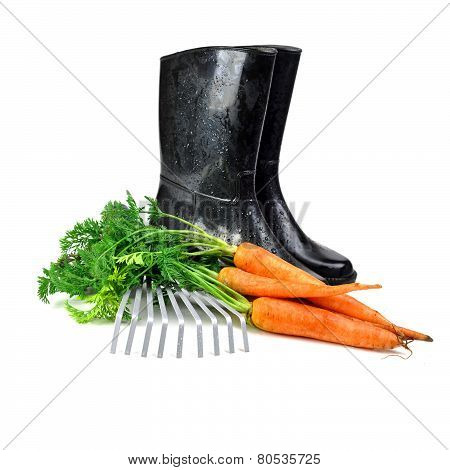 Carrot And Gardening Tools