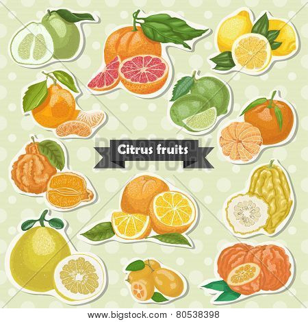 Set of isolated label citrus fruits