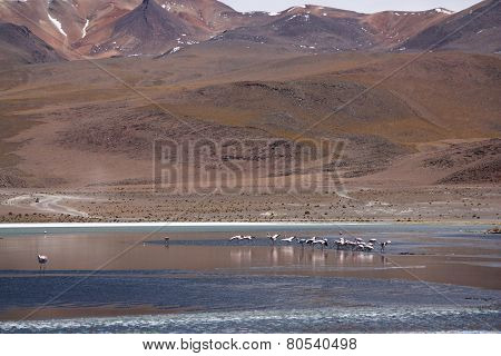Wild nature landscape in Bolivian Andes