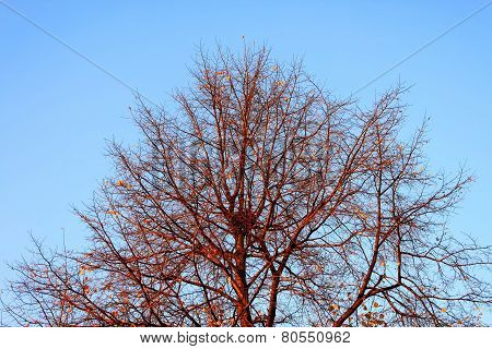 Tree Branches With Nest On Blue Sky Background