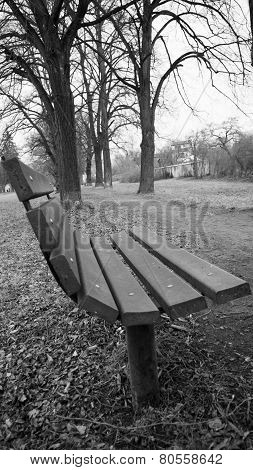 Wooden park bench lining the clay path in the tree alley, black and white