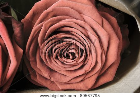 Rose Bouquet Macro - Vintage