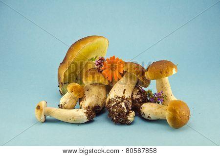 Fresh Mushroom Fungi Boletus On Blue Background