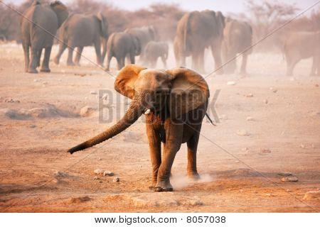 Elephant Mock Charging