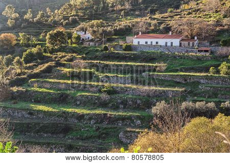Traditional Lodge On The Hill. Summer In Portugal.