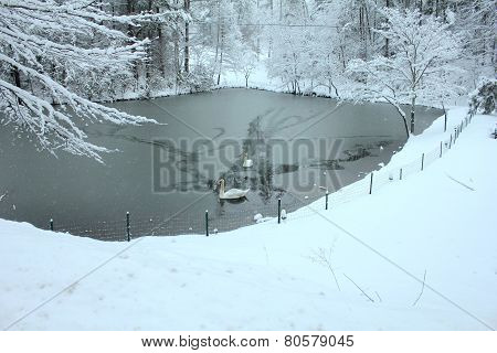 swans on lake in snow
