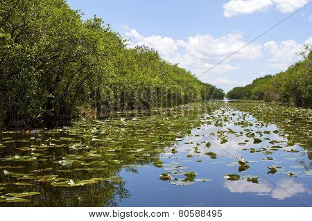 Everglades Swamp In Florida