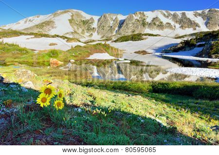 Alpine Meadow With Wild Flowers And Lake With Reflection In Snowy Range Mountains, Wyoming