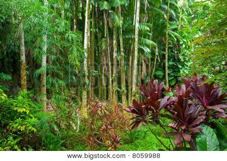 Lush Tropical Rain Forest