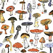 picture of chanterelle mushroom  - Vector seamless pattern with watercolor drawing mushrooms - JPG