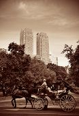 pic of carriage horse  - Central Park Spring and horse carriage in midtown Manhattan New York City - JPG