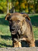 picture of stray dog  - Stray young dog living in the park - JPG