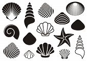 picture of scallop shell  - Set of different black sea shells and starfish - JPG
