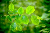 picture of tree leaves  - forest trees leaf - JPG