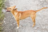 stock photo of stray dog  - Close up stray dog standing on bumpy road - JPG