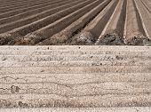 pic of potato-field  - Structures of a potato field after preparation - JPG