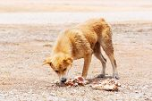 pic of stray dog  - Close up dirty stray dog try to hold the bone in mouth - JPG