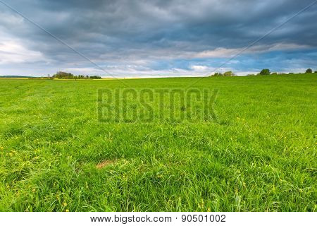 Green Meadow Under Stormy Sky