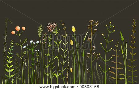 Wild Field Flowers and Grass on Black