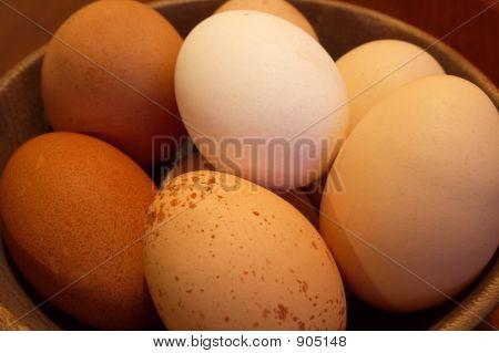 Diversity - Free Range Eggs