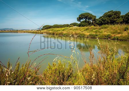 Beautiful countryside landscape with a lake and green vegetation