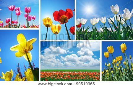Set from spring tulips. Nature composition.