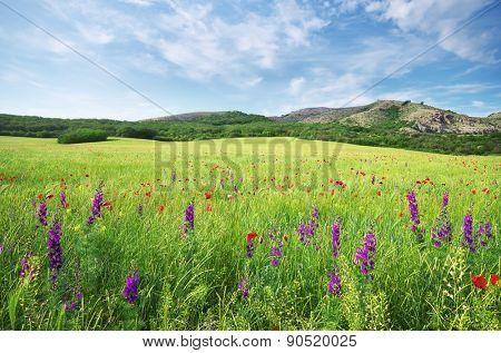 Spring flower in green meadow. Beautiful landscapes.