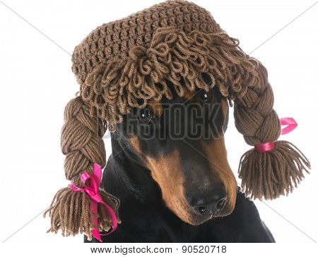 female dog - doberman pinscher wearing silly wig on white background