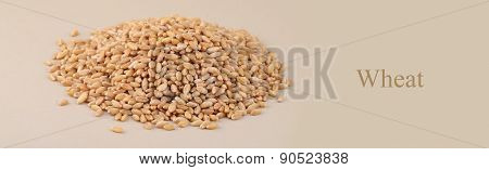 Heap of Wheat grains