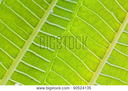 Tropical Leaves Macro