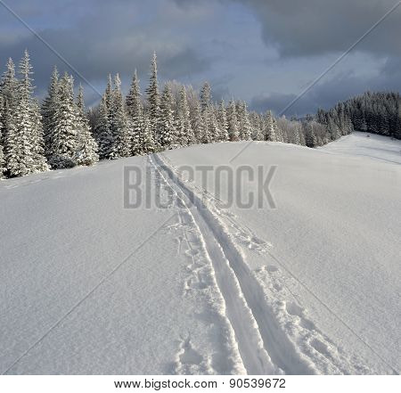 Winter Landscape In The Carpathian Mountains