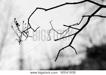 Silhouettes Of Winter Branches Of A Tree