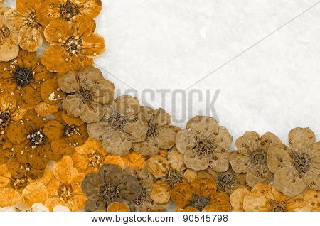 Decorative Montage Compilation Of Colorful Dried Spring Flowers