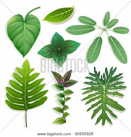 Different Shape Of Leaves