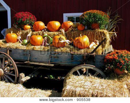 Pumpkins Harvest