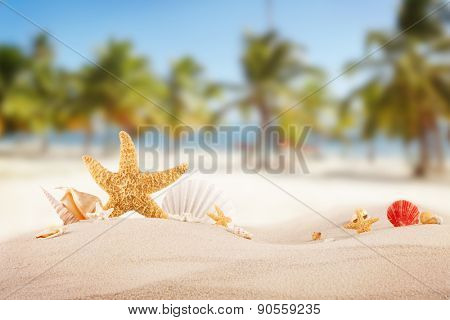 Sandy beach with seashells, blur azure water on background. Free space for text