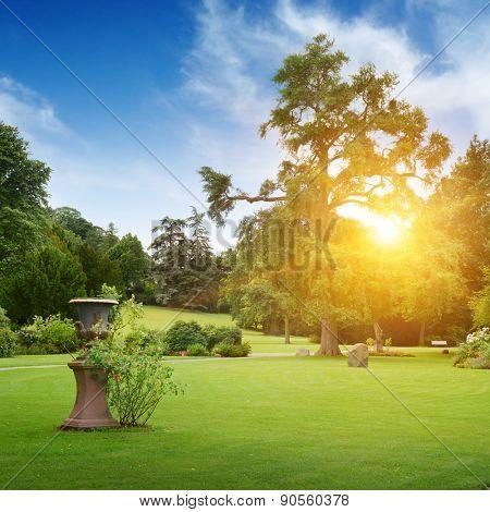 Sunrise in beautiful summer park