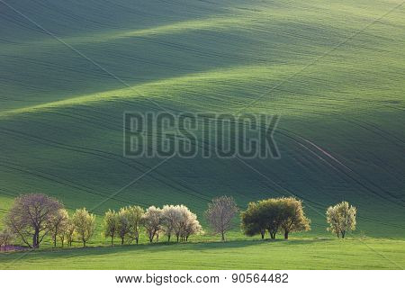 Minimalism Amazing Landscape for seasonal background or wallpapers - Green and Blossom Trees overlooking Waves of Hills, fresh green