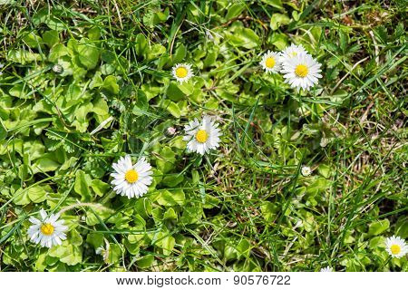 Spring Flowers On Green