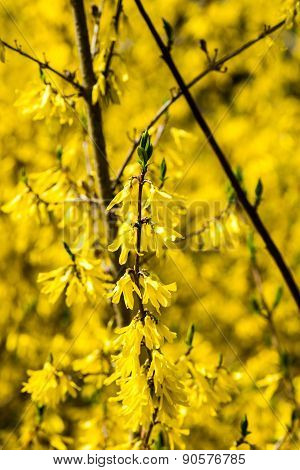 Yellow Spring Flowers On Green