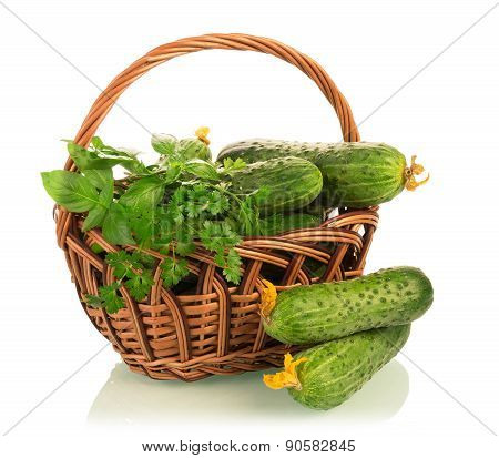 Fresh cucumbers in basket