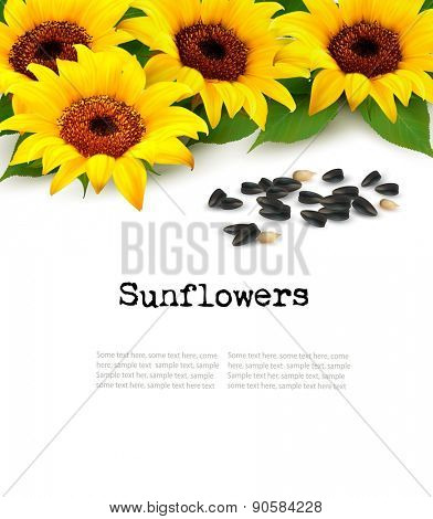 Sunflowers background with sunflower seeds. Vector.