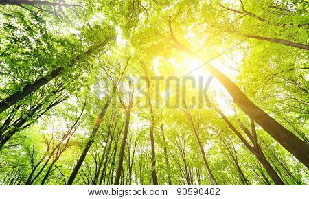 Morning in the green forest at summer